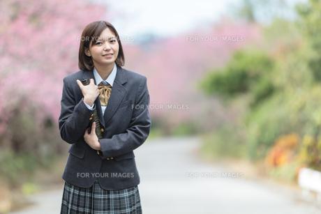 桜と証書筒を持った女学生の写真素材 [FYI01181585]