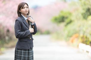 桜と証書筒を持った女学生の写真素材 [FYI01181589]
