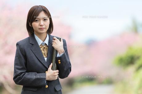 桜と証書筒を持った女学生の写真素材 [FYI01181590]