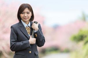 桜と証書筒を持った女学生の写真素材 [FYI01181591]