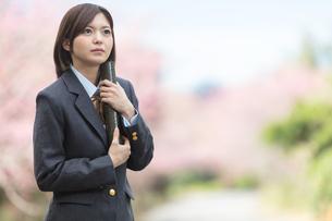 桜と証書筒を持った女学生の写真素材 [FYI01181594]