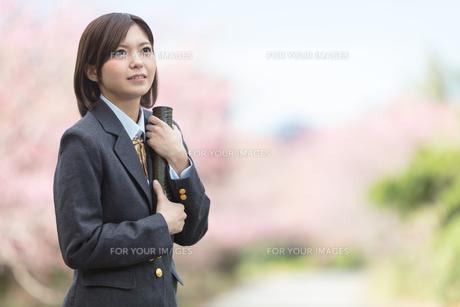 桜と証書筒を持った女学生の写真素材 [FYI01181595]