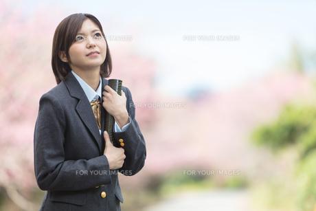 桜と証書筒を持った女学生の写真素材 [FYI01181596]