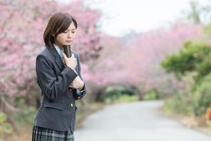 桜と証書筒を持った女学生の写真素材 [FYI01181598]