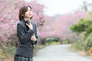 桜と証書筒を持った女学生の写真素材 [FYI01181599]
