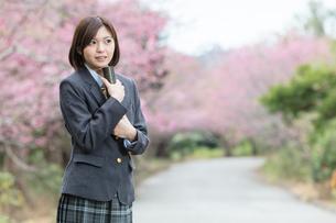 桜と証書筒を持った女学生の写真素材 [FYI01181600]