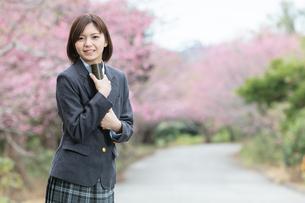 桜と証書筒を持った女学生の写真素材 [FYI01181601]