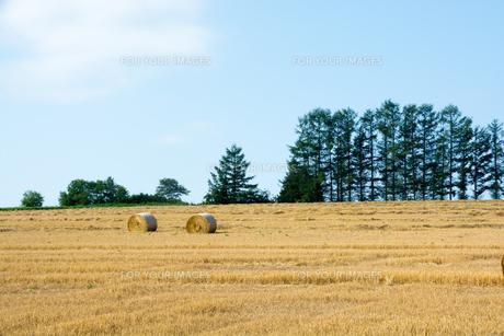 刈り取りが終わった麦畑と麦稈ロールの写真素材 [FYI01181716]