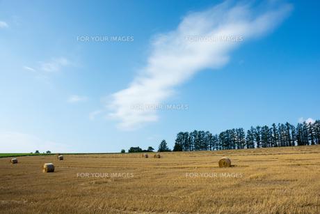 刈り取りが終わった麦畑と麦稈ロールの写真素材 [FYI01181717]