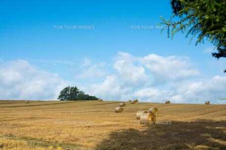 刈り取りが終わった麦畑と麦稈ロールの写真素材 [FYI01181718]
