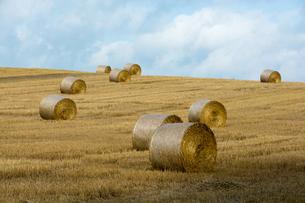刈り取りが終わった麦畑と麦稈ロールの写真素材 [FYI01181720]