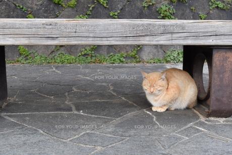 ベンチ下の猫の写真素材 [FYI01181765]