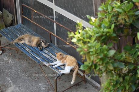 青いベンチと猫の写真素材 [FYI01181766]