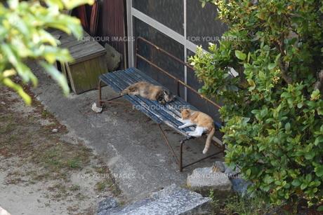 青いベンチと猫の写真素材 [FYI01181767]