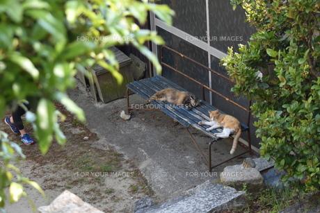 青いベンチとと猫の写真素材 [FYI01181768]