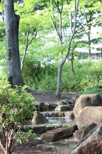 小川と新緑の写真素材 [FYI01181808]