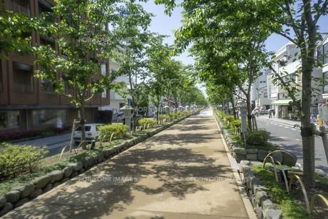 鎌倉八幡宮への道の写真素材 [FYI01181950]