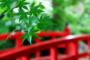 日本らしさを感じる初夏の風景の写真素材 [FYI01181995]