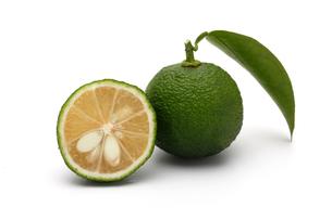 緑色のゆず果実、柑橘類の写真素材 [FYI01182417]