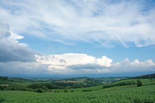 緑の丘陵地帯と夏の空の写真素材 [FYI01182488]
