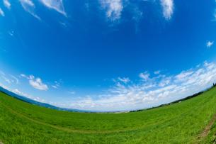 緑の草原と青空の写真素材 [FYI01182490]