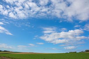 緑の野菜畑と青空の写真素材 [FYI01182512]