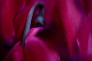 花の写真素材 [FYI01182697]