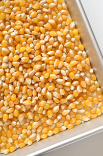 ポップコーン原料豆の写真素材 [FYI01183278]