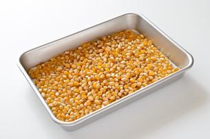 ポップコーン原料豆の写真素材 [FYI01183280]