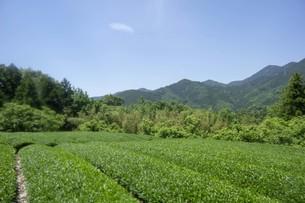初夏の山岳風景の写真素材 [FYI01183725]