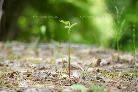 若木の写真素材 [FYI01183745]