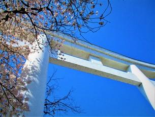 長瀞の桜の道の写真素材 [FYI01183770]