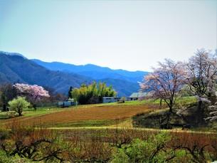 春の田園の写真素材 [FYI01183798]