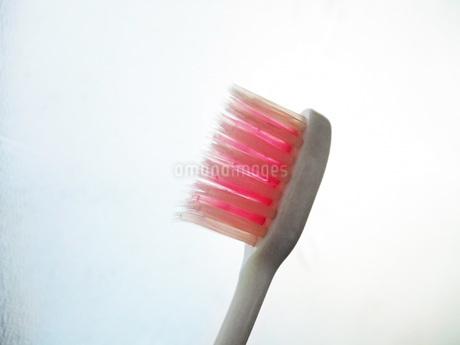 歯ブラシの写真素材 [FYI01184265]