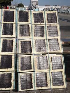海苔の天日干しの写真素材 [FYI01184359]
