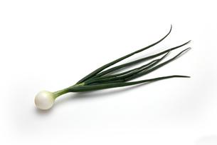 葉たまねぎ 若い玉ねぎの写真素材 [FYI01184453]