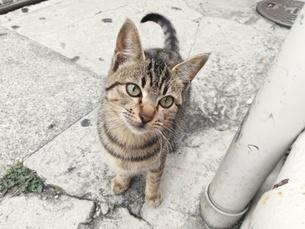 近寄る猫の写真素材 [FYI01184495]