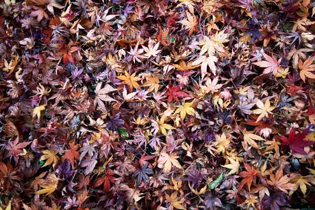 落ち葉のテクスチャの写真素材 [FYI01184664]