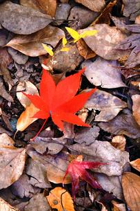 落ち葉が彩る秋の風景の写真素材 [FYI01184714]