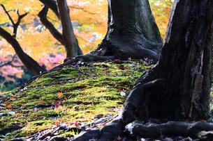 柔らかな日差しに映える秋の庭園の写真素材 [FYI01184721]