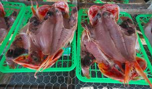 金目鯛の干物の写真素材 [FYI01185002]