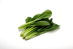 小松菜,コマツナの写真素材 [FYI01185070]