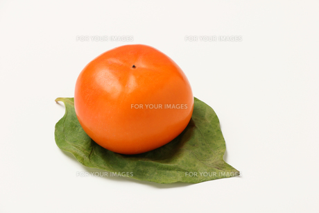柿,カキの写真素材 [FYI01185074]