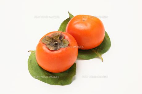 柿,カキの写真素材 [FYI01185075]