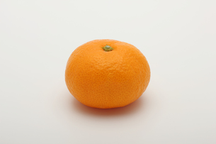 みかん,マンダリンオレンジの写真素材 [FYI01185079]