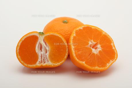 みかん,マンダリンオレンジの写真素材 [FYI01185080]