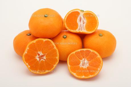 みかん,マンダリンオレンジの写真素材 [FYI01185082]