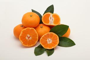 みかん,マンダリンオレンジの写真素材 [FYI01185083]