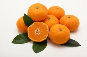 みかん,マンダリンオレンジの写真素材 [FYI01185084]