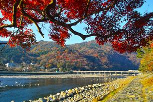 紅葉シーズンの渡月橋の写真素材 [FYI01185207]